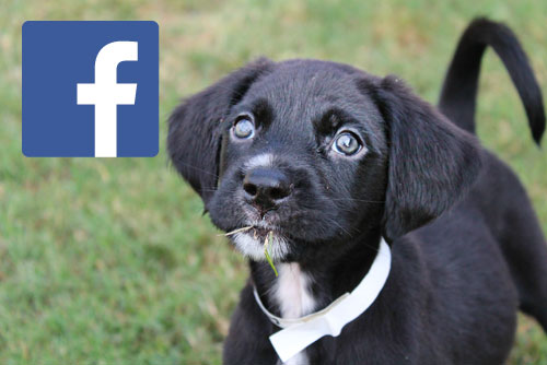 Facebook - Adopt rescue save dogs shreveport bossier city